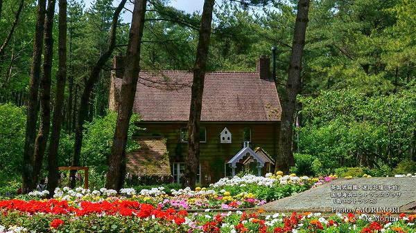 国際海浜エントランスプラザ 南エントランス メイズガーデン(迷路花壇) 英国式庭園ガーデンハウス