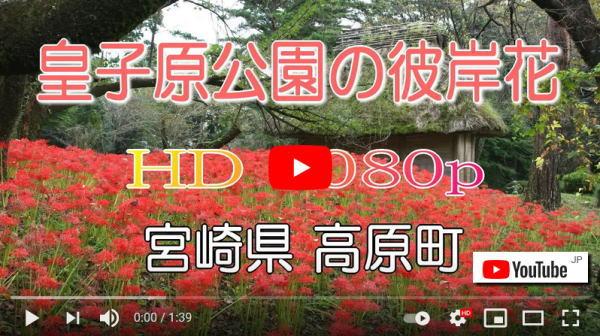 スライド動画、皇子原公園の彼岸花
