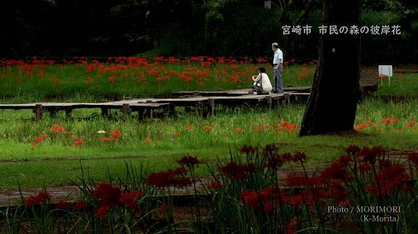 宮崎市 市民の森の彼岸花 2021−2