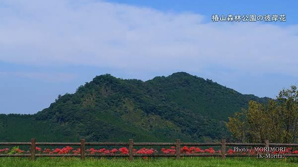 椿山森林公園 彼岸花と双石山(ぼろいしやま)