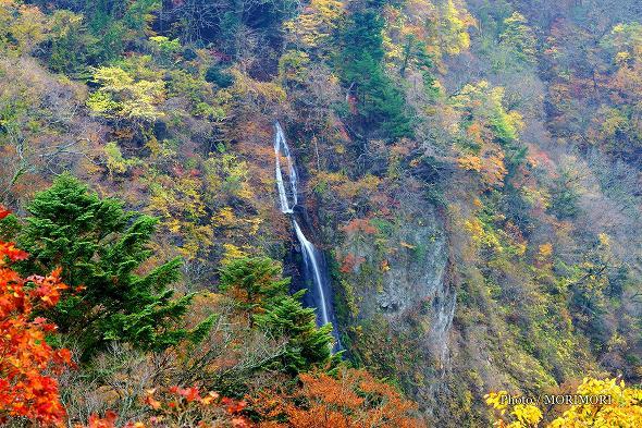 震動の滝(雌滝) 紅葉